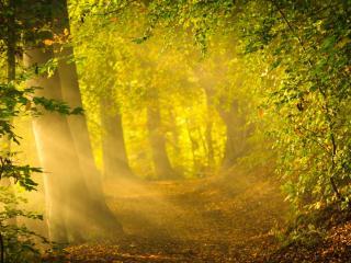 обои Пейзаж леса залитого солнечным светом фото