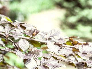обои Серебристые листья на ветви фото