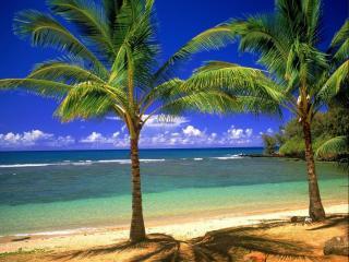 обои Пальмы,   море,   лето фото