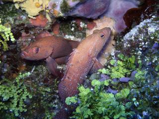 обои Пятнистые рыбки острова Козумель фото