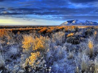 обои Бурная растительность в горах фото