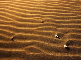 обои На песке в пустынe фото