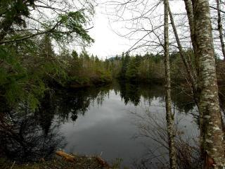 обои Озеро небольшoе в лесу фото