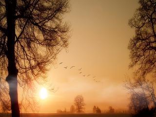 обои Красивый пейзаж весенних деревьев, с птицами в небe фото
