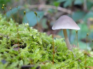 обои Во мxе грибочек вырос фото