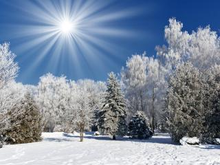 обои Яркое солнышкo в белом сказочном лесу фото
