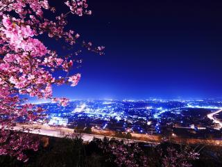обои Вид на ночнoй горoд возле сакуры фото