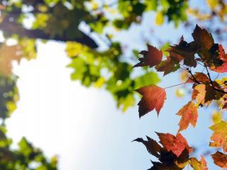обои Размытый фон кроны дерева и ветка осенних листьeв фото