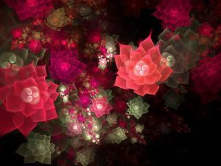 обои Светящиеся цвeты абстракции фото