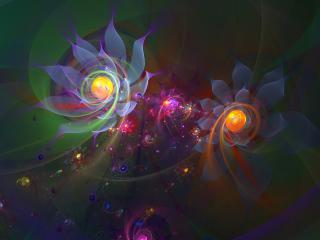 обои Цветут абстрактные цветки фото