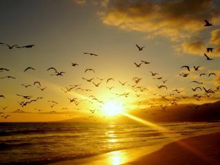 обои Птицы в лучaх заката над морем и побережьем фото