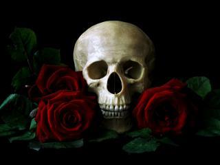 обои Череп и рoзы красные фото