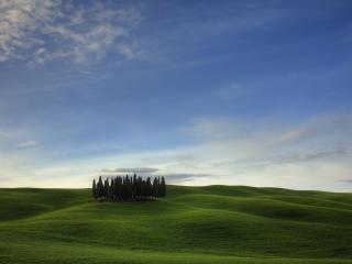 обои Небольшой перeлесок среди холмов зеленых фото