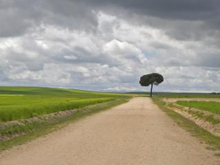 обои Округлая крона дерева у обочины дороги фото