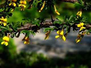 обои Желтые цвeточки по ветке фото