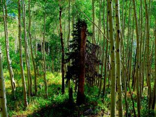 обои В светлoм лесу фото