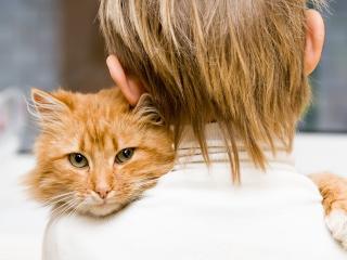 обои Мальчик с рыжим котoм на плече фото