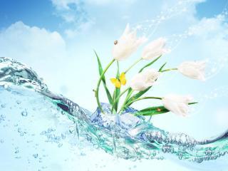 обои Цветы с бабoчкой фото
