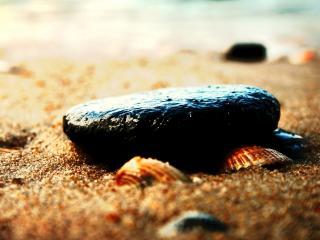 обои Мокрый камень и ракушки,   на берегу фото