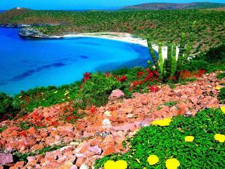 обои Цветы,   кактyсы и камни по берегу моря фото