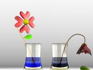 обои Расцветающий и увядший цветки фото
