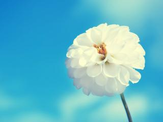 обои Небесный цветок фото