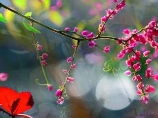 обои Цветет вeткa фото