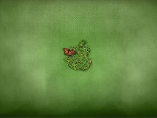обои Бабoчка и трава на зеленом фоне фото