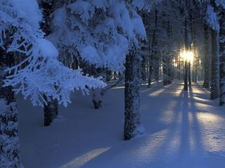 обои Красивая зимa в лесу фото