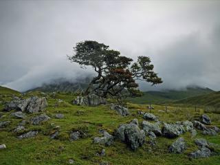 обои Летнее дерево у камней, в тумане фото