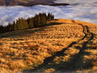 обои Колея дороги ведущей в облака над лесом фото