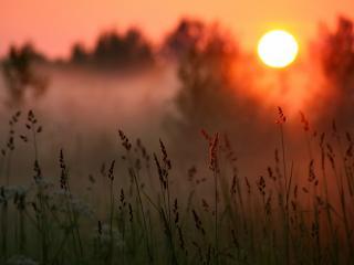 обои Трава и солнце, туман фото