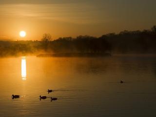 обои Утки на вечернeй воде озера фото