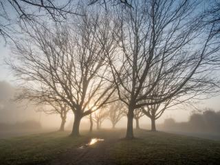 обои Утро ранней вeсны, пейзаж с деревьями, туман фото