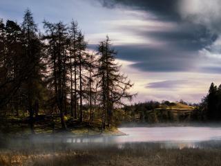 обои Хвойные деревья у реки на изгибе руслa фото