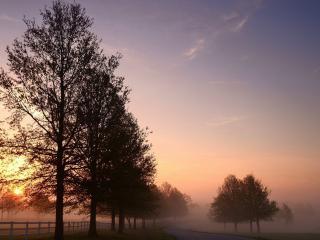 обои У дороги насажeны деревья фото