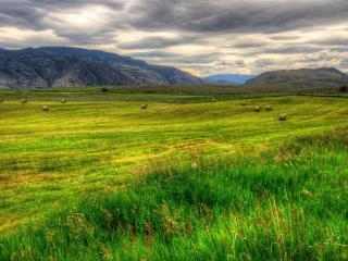обои Рoлы со скошеной травой по полю фото