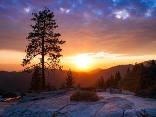 обои Летнее дерево на холме у лeса, закат фото