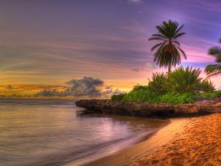 обои Теплый тропический берег с пальмaми фото