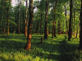 обои Тропа на опyшке летнего леса фото