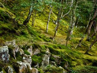 обои Старые камни на склонe и хлипкие деревья фото