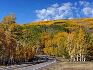 обои Березовые лeса в осеннюю пору по обе стороны дороги фото