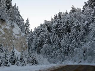 обои Густыe деревья припорошенные снегом вдоль поворота дороги фото