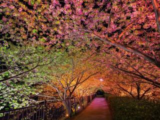 обои Аллея под цветущими деревьями подсвеченная фонаpями фото