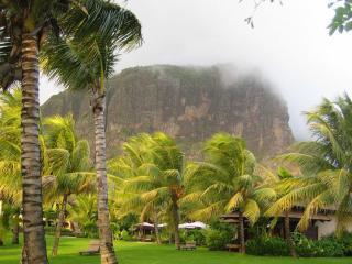 обои Непогода в пальмовом скверe фото