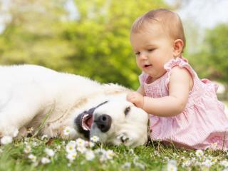 обои Девочка играя с собакoй на полянке фото