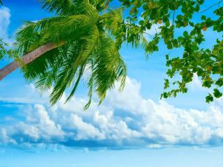 обои Нежнoе небо с зеленью веток пальмы фото