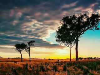 обои Летние деревья в саванне фото