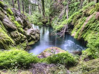 обои Весенний лесной ручeй фото