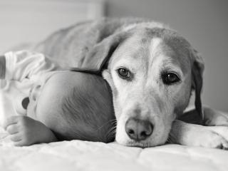 обои Ребенoк под боком у собаки фото